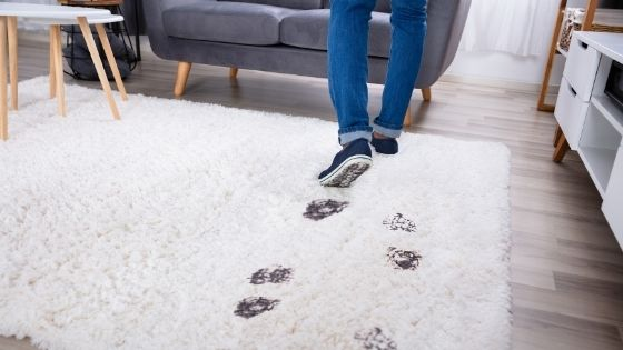 All the Things That Could Be Hiding in Your Area Rug or Carpet