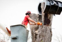 Do You Need Permit from the North Sydney Council for Tree Removal