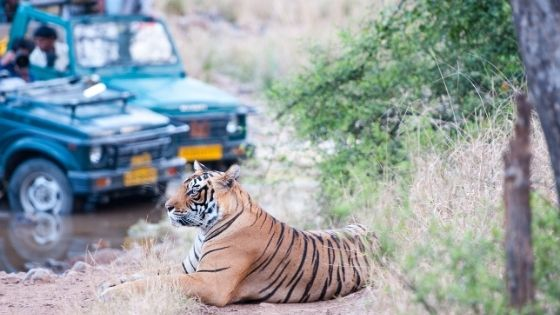 Best Places For a Tiger Safari in India