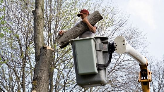 How and Why of Tree Removal Service