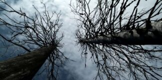 What to Do With a Dead Tree In Your Yard