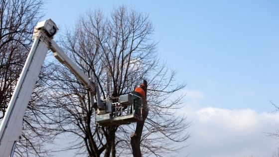 When to Prune Your Tree Throughout the Four Seasons