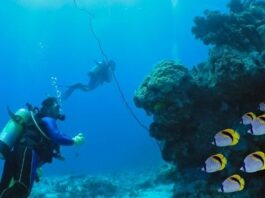 5 Types Of Commercial Divers: Their Lists of Tasks And Responsibilities