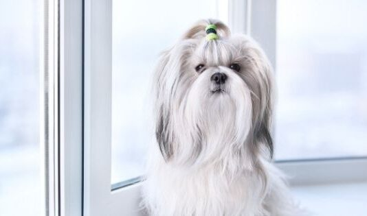 The Cutest Small Dog Breeds You Can Easily Adopt