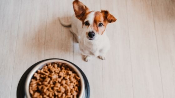 The Secret to a Healthy Dog Diet